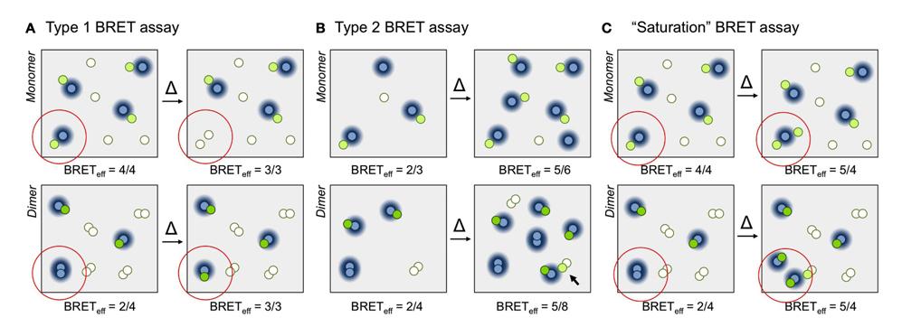 BRET and GPCRs, Simon Davis Lab, Oxford